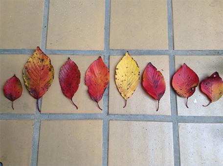 今年も秋の色1
