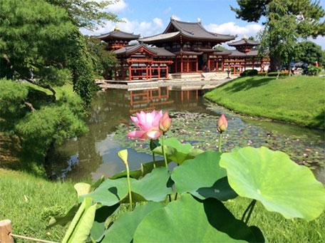 京都宇治の蓮の華