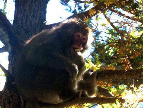 お猿さん、ありがとう。また来るからね。