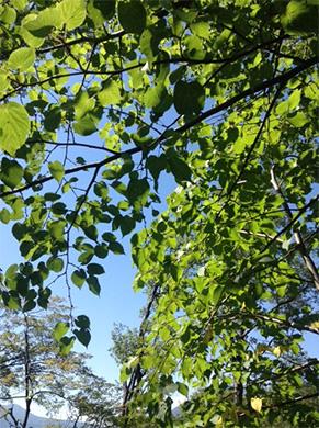 ホテルエルボスコ周辺の森