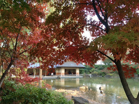 今年も秋の色3